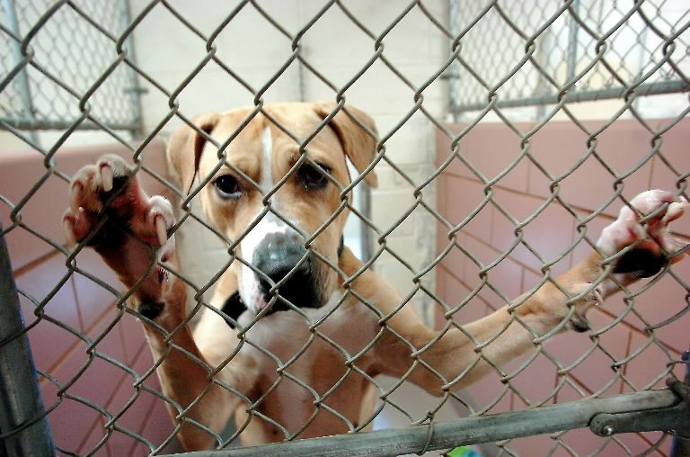 diritti animali versus doveri umani