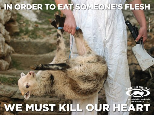 Un agnello sta per essere sacrificato.