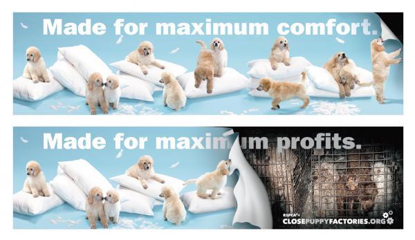 Campagna della RSPCA contro le puppy mills
