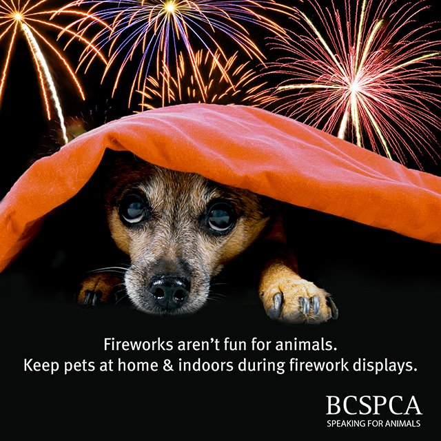 Ban fireworks dangerous for animals