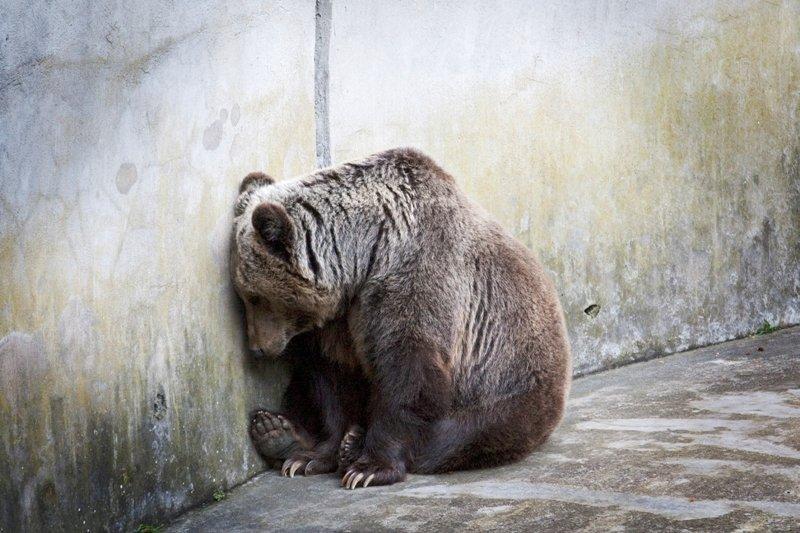 sofferenza degli animali