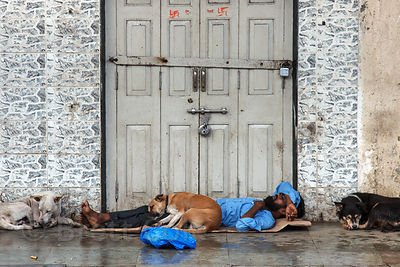 Stray dog India