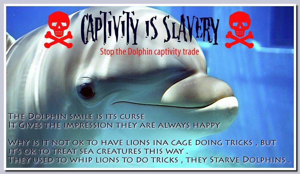 Sfruttamento degli animali marini