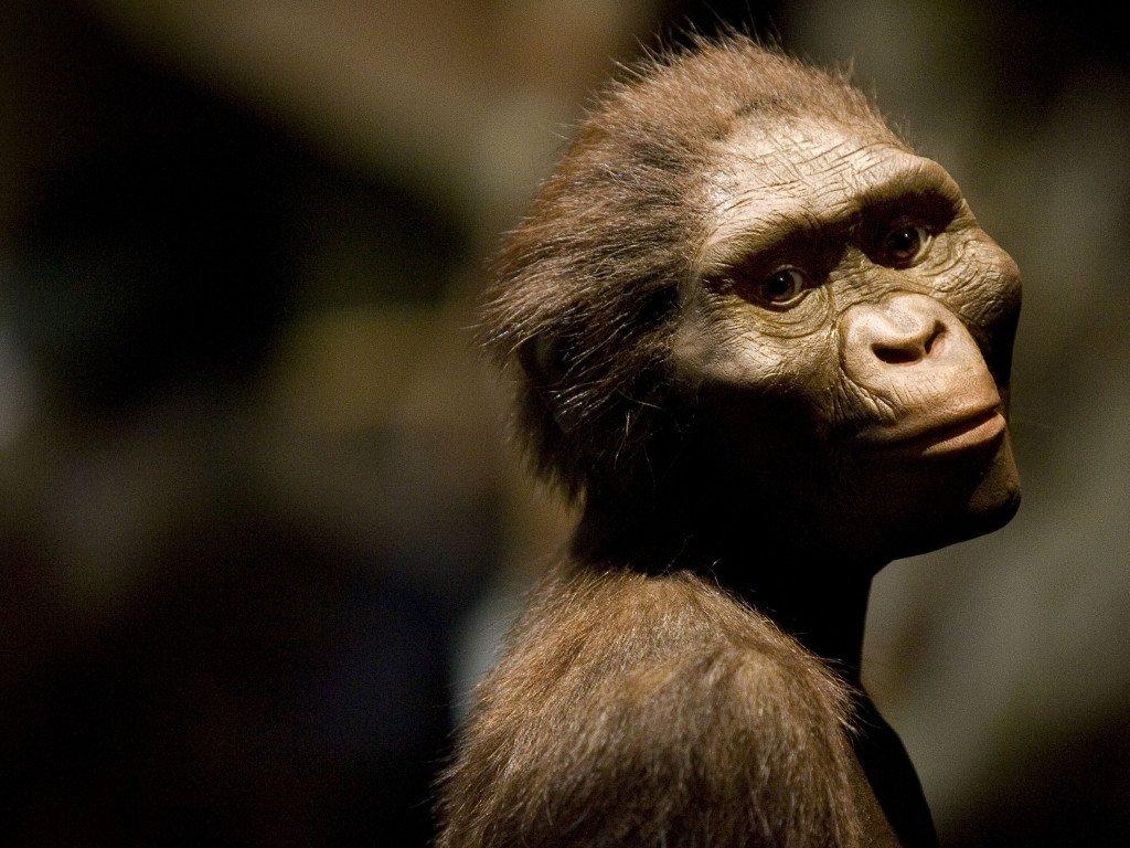 Lucy, il gorilla e l'uomo