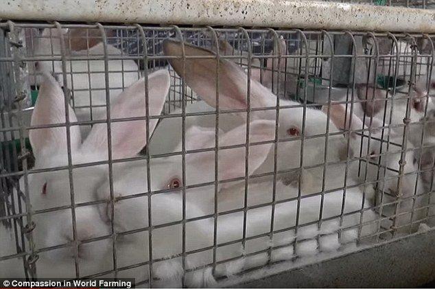 Animale da compagnia fa rima spesso con prigionia - Rima con porta ...