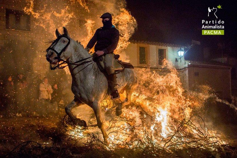 """Cavalli nel fuoco: la crudeltà della festa de """"Las luminarias"""""""