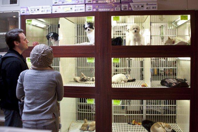 Animali in vetrina emozioni che provocano abbandoni