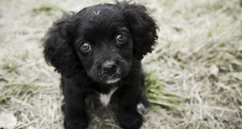 Cuccioli dall'Est Europa, occorre fermare questa tratta
