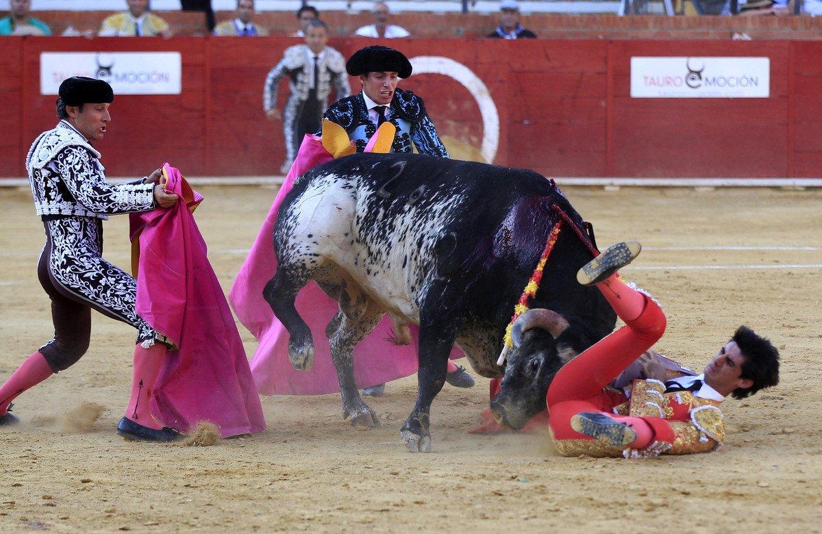 Torero muore incornato, non bisogna far festa!