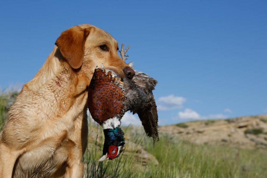 sarebbe responsabile chiudere la caccia