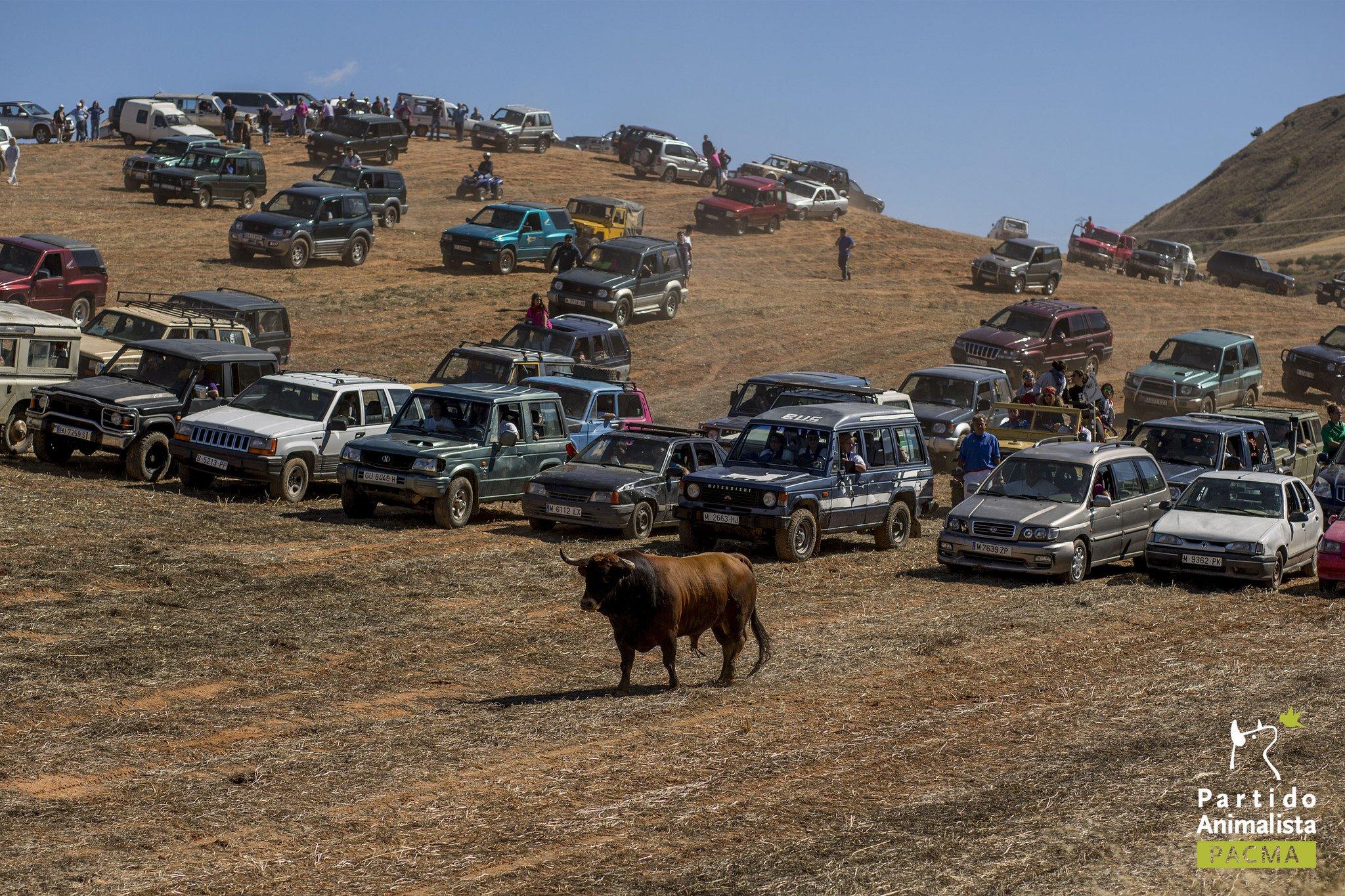 Rally automobilistici contro tori, illegali ma tollerati a Guadalajara