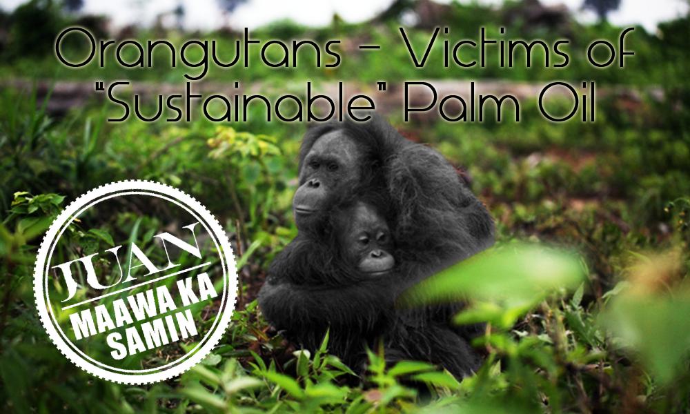 olio di palma rischia di diventare un toccasana ambientale