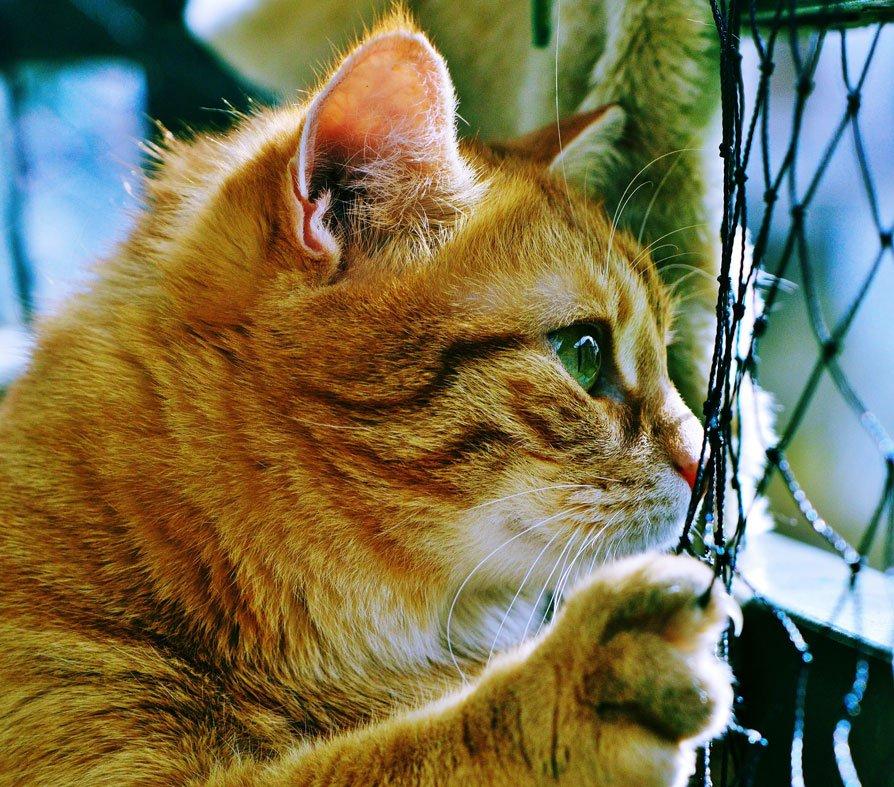 Persuadere sui diritti animali passa dalla capacità di comunicare