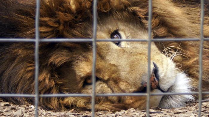 Difendere gli animali, denunciare i maltrattamenti