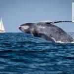 Corro per le balene 2017