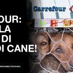 Carne di cane venduta da Carrefour