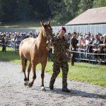 Cavalli sequestrati nel Canton Turgovia