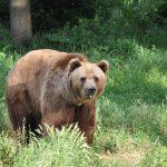 Governo stanzia fondi per danni provocati dagli orsi