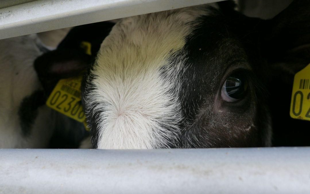Disumani con gli animali solo per profitto