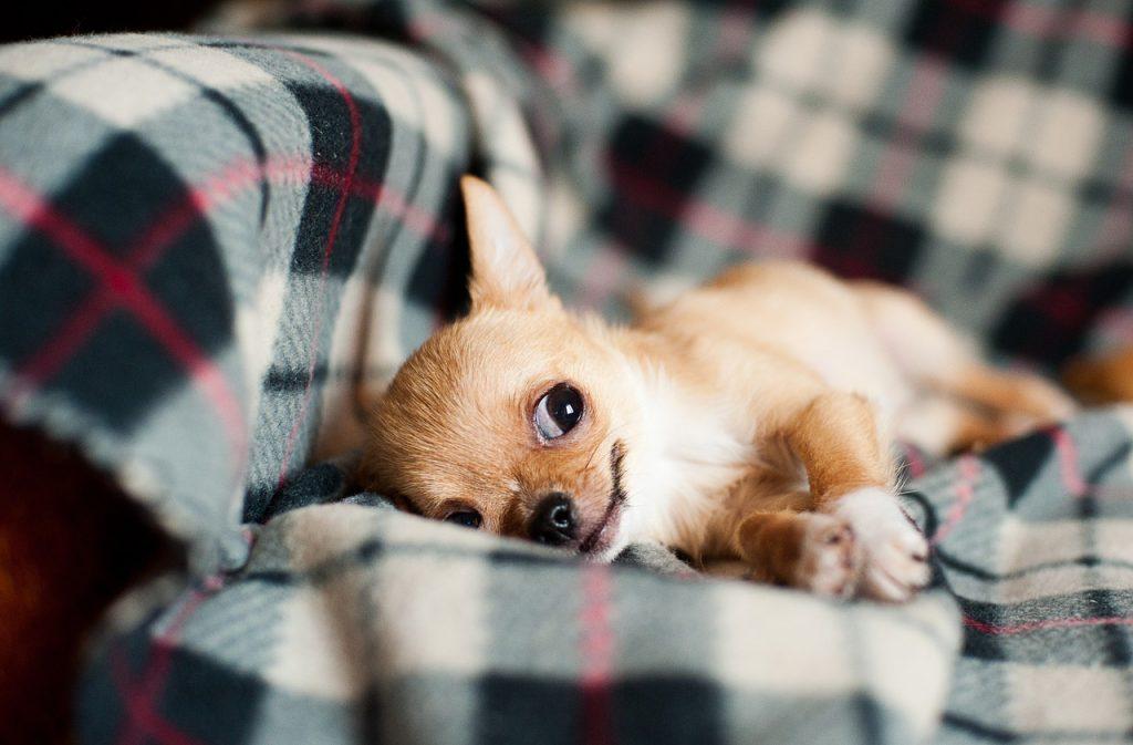 Comprare Un Cane Meticcio Di Razza Alimenta Il Traffico Dei Cuccioli