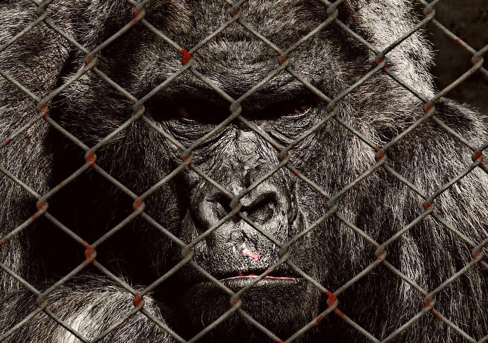 Animali ingabbiati dalla politica elettorale
