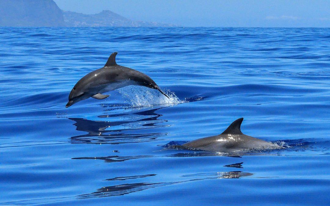 Delfini in pericolo per la pesca con lo strascico