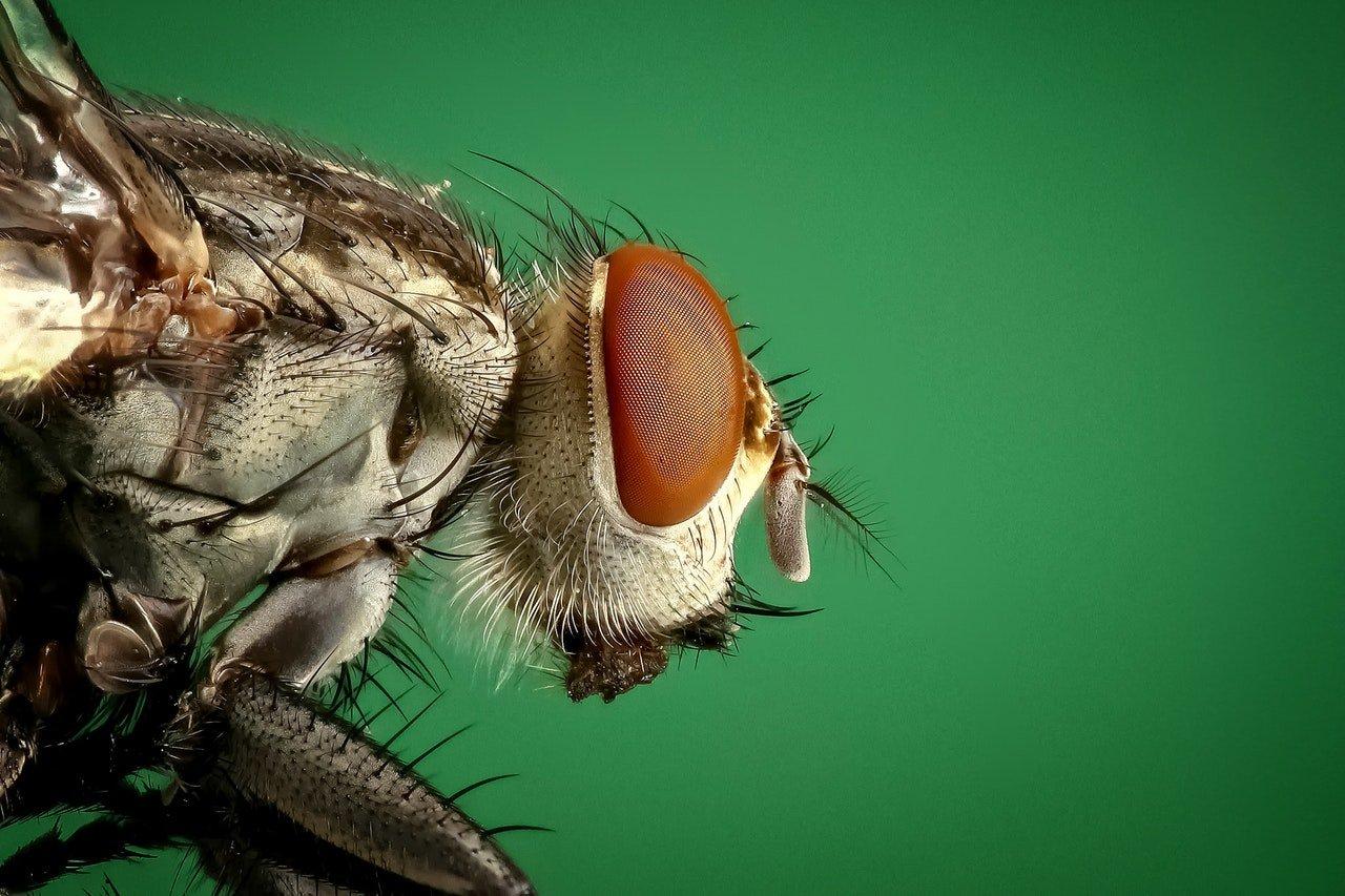Troppe Mosche In Giardino la crudeltà non si giustifica neanche su una mosca e non è arte