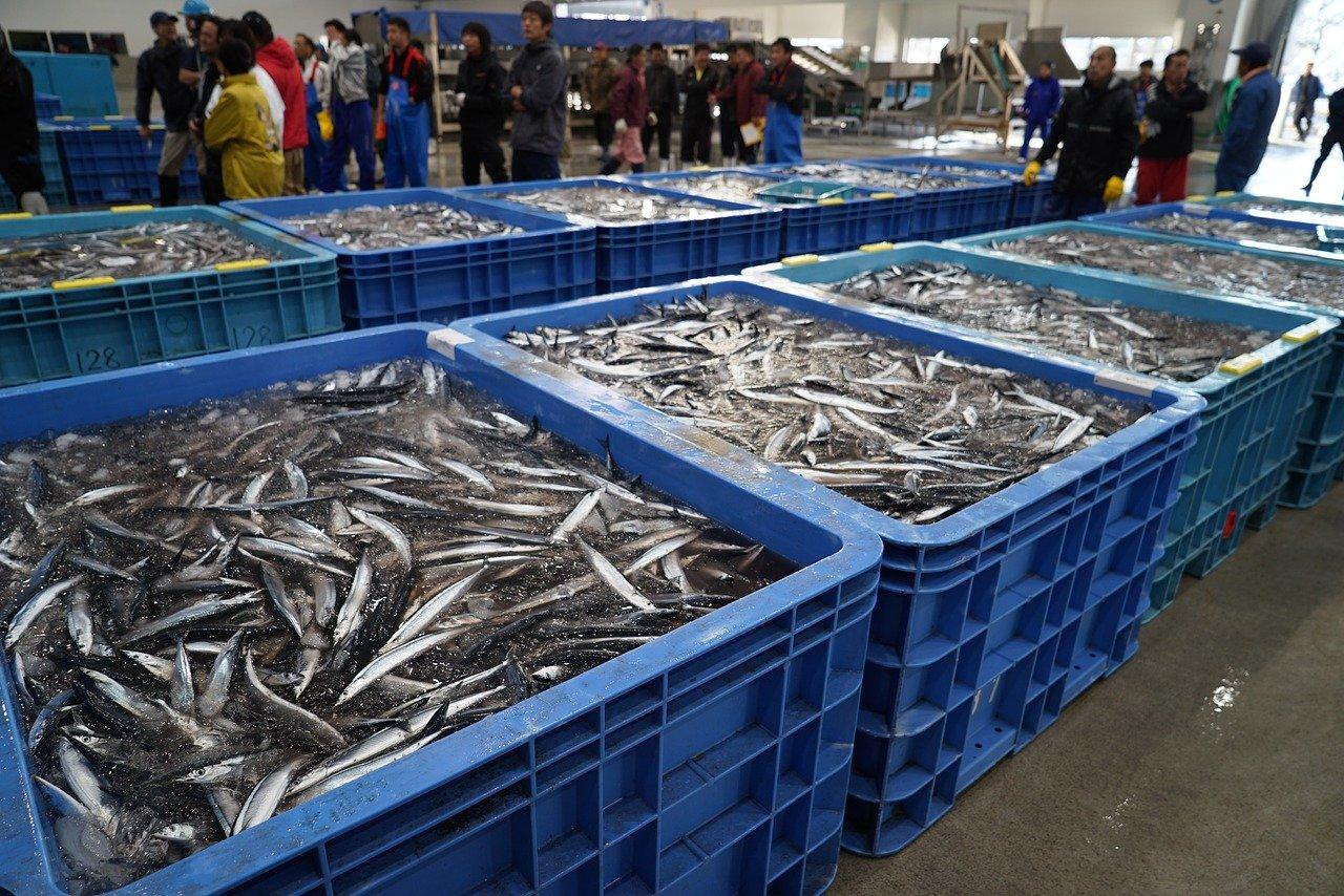 La pesca elettrica deve essere vietata