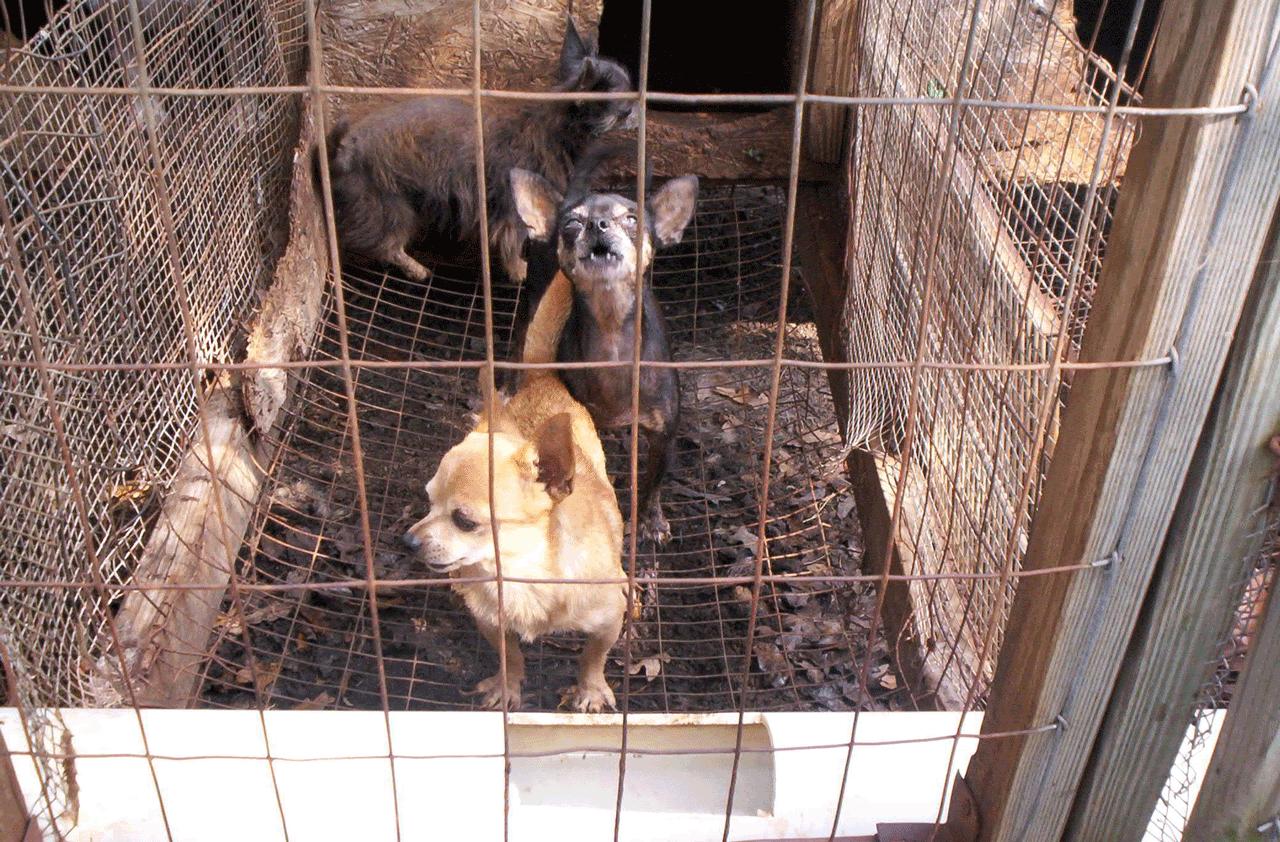 traffico di cuccioli dall'Est