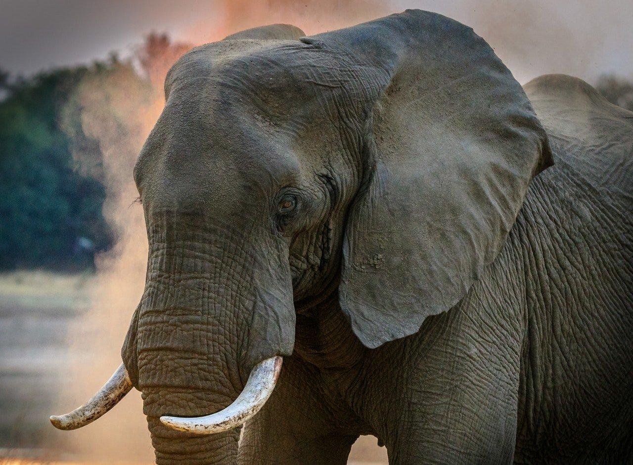 Elefanti uccisi in Botswana