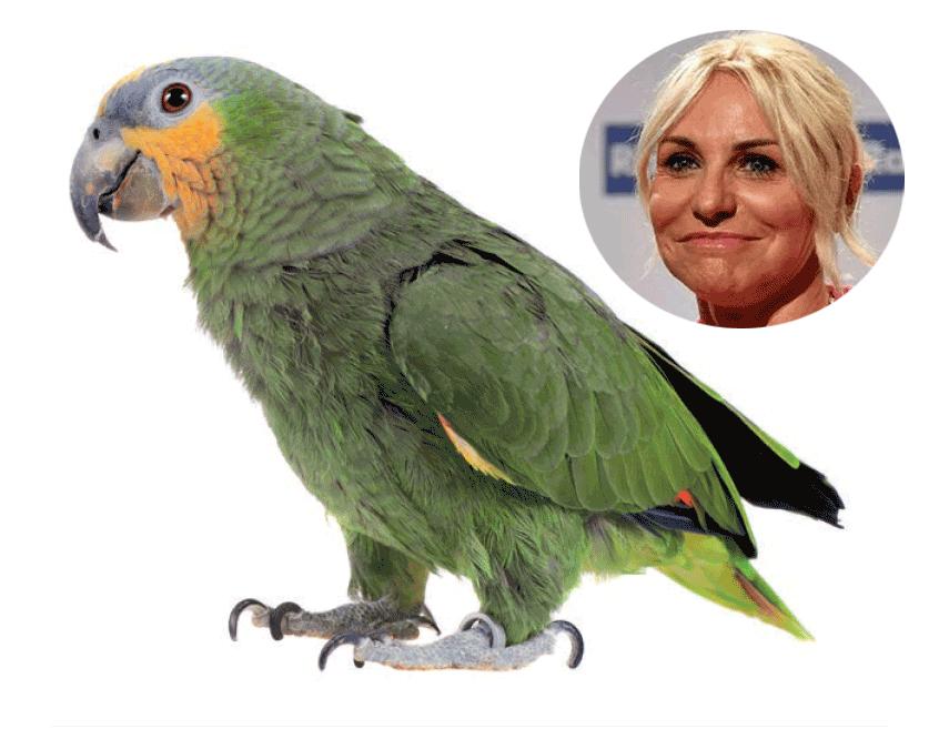 Antonella Clerici rimette Portobello in catene