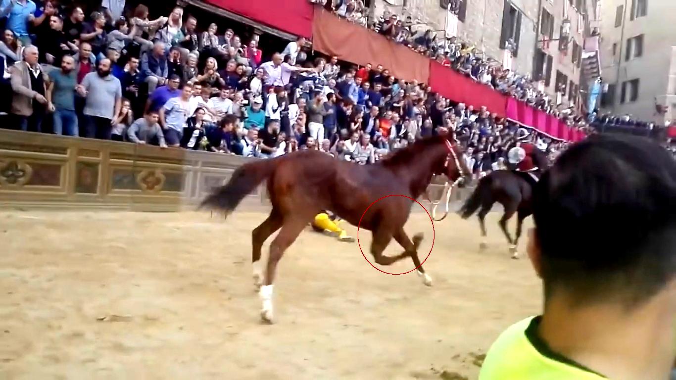 Altro Palio e altro cavallo morto a Siena