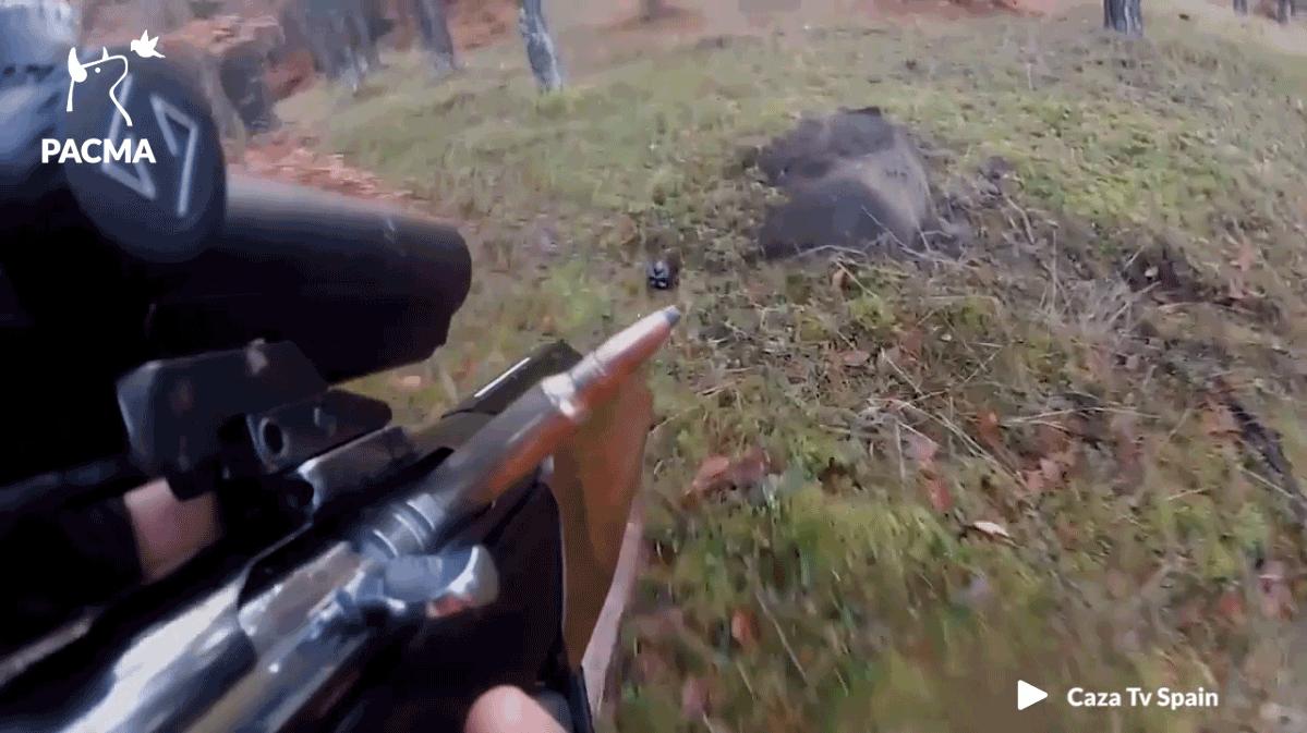 Contro la caccia qualcosa si muove in Europa