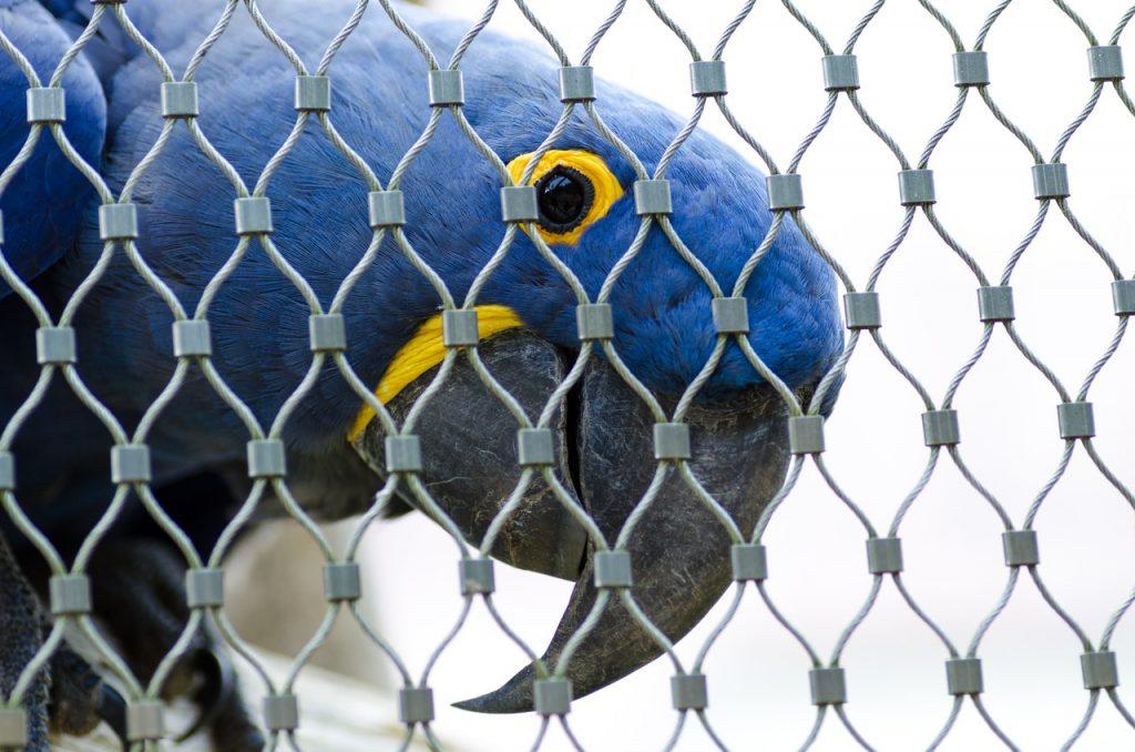 Sequestrati pappagalli protetti