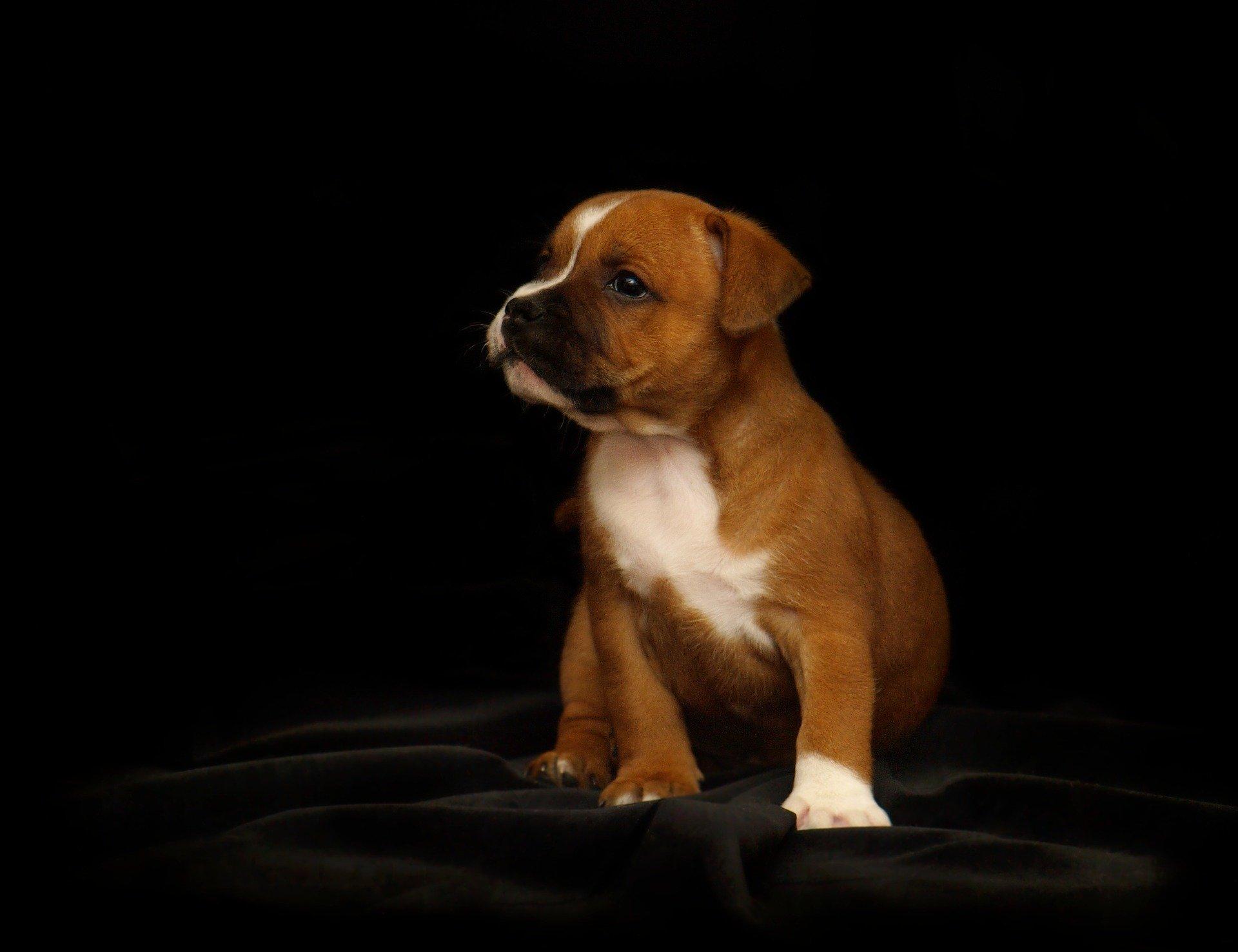 adottare animali non regalare vite