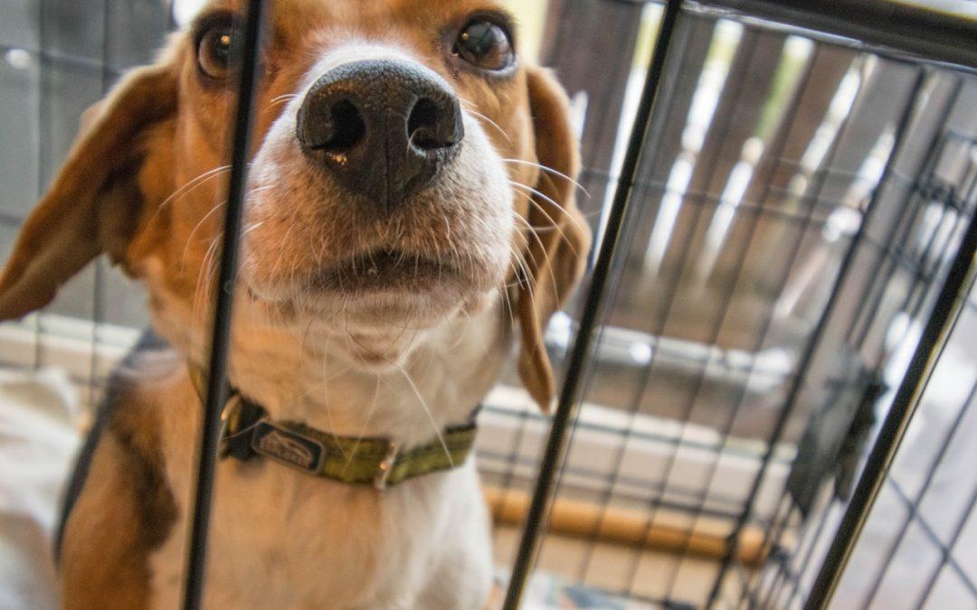 Cani sempre in viaggio: l'eterno trasloco dei randagi