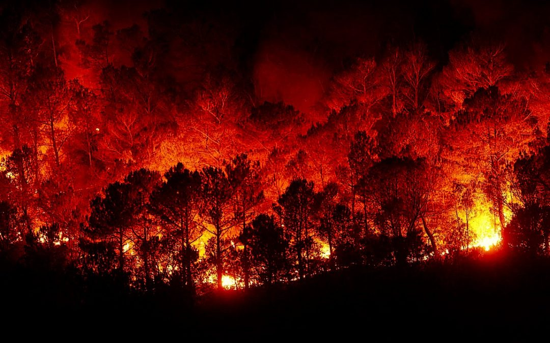 Il mondo brucia e la comunità umana resta ancora immobile