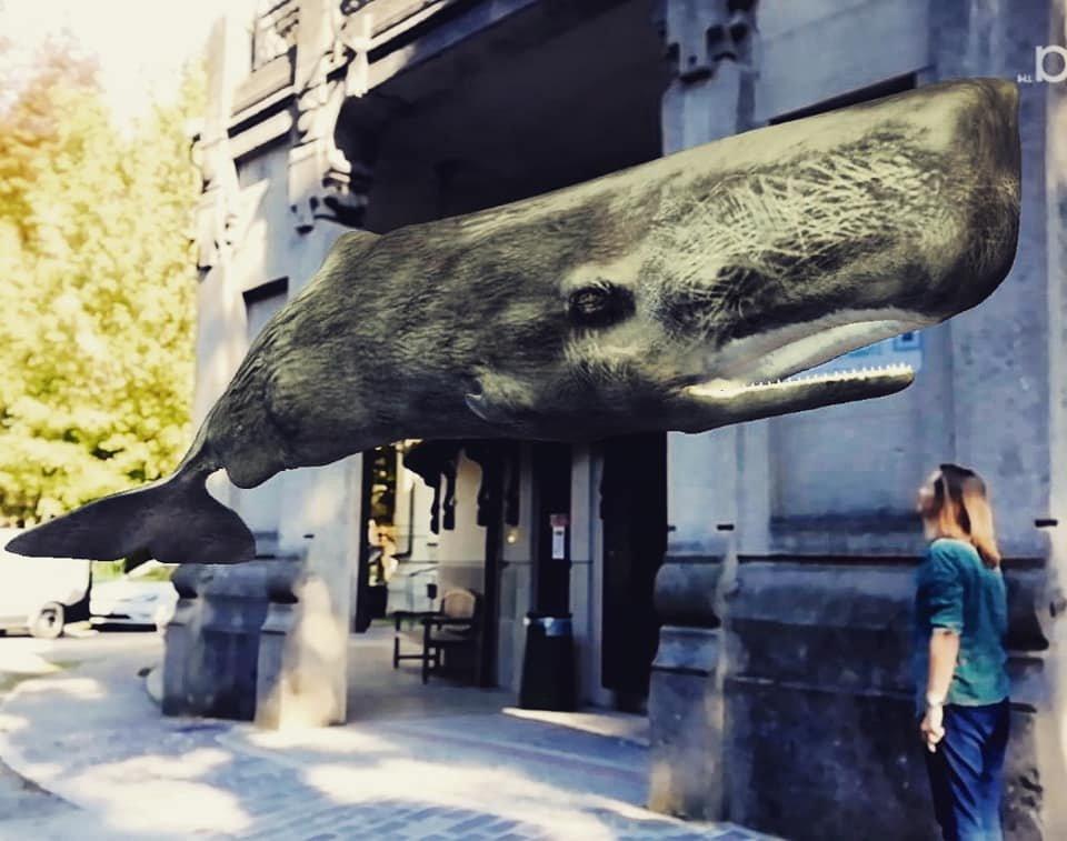 Milano arrivano i cetacei