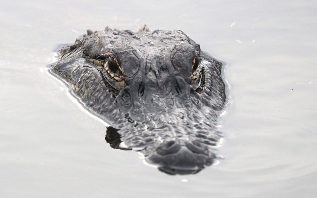 Barriere con alligatori per fermare immigrazione