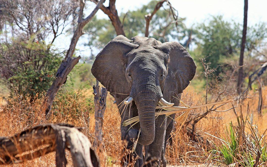 Gestire i conflitti fra uomo e animali