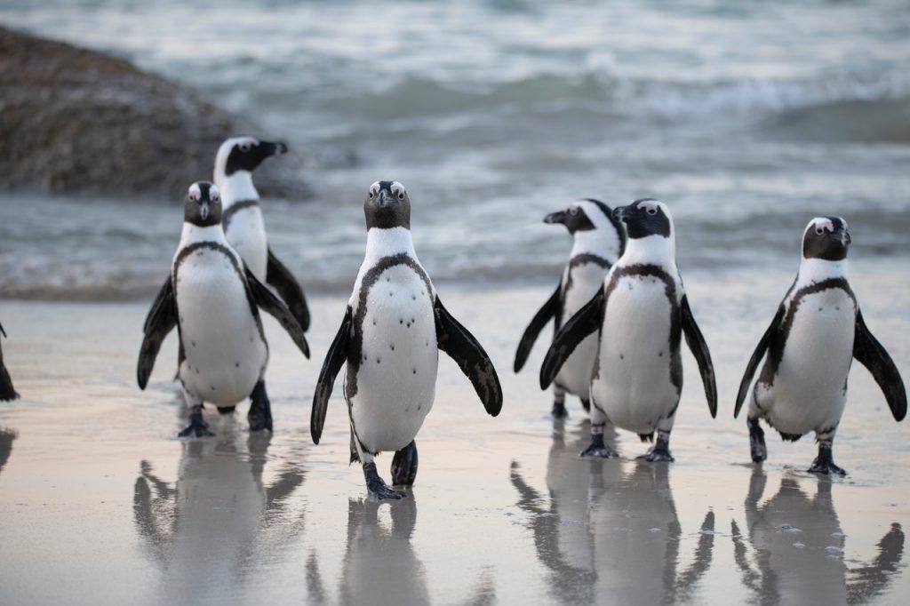 Antartide in pericolo