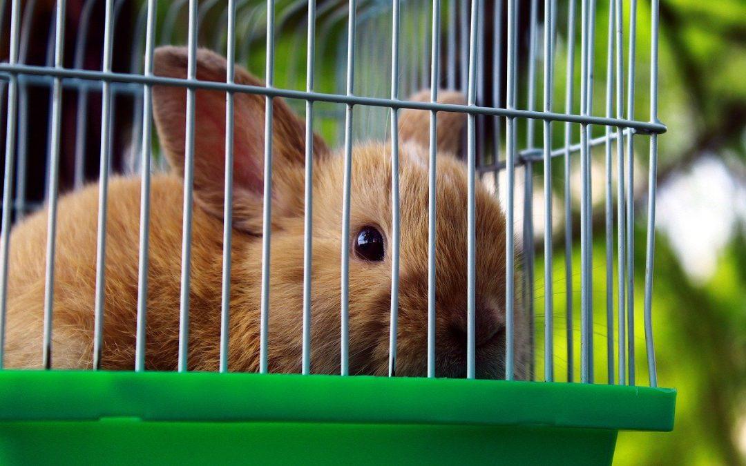 Sempre più conigli nelle case, sempre meno nel piatto