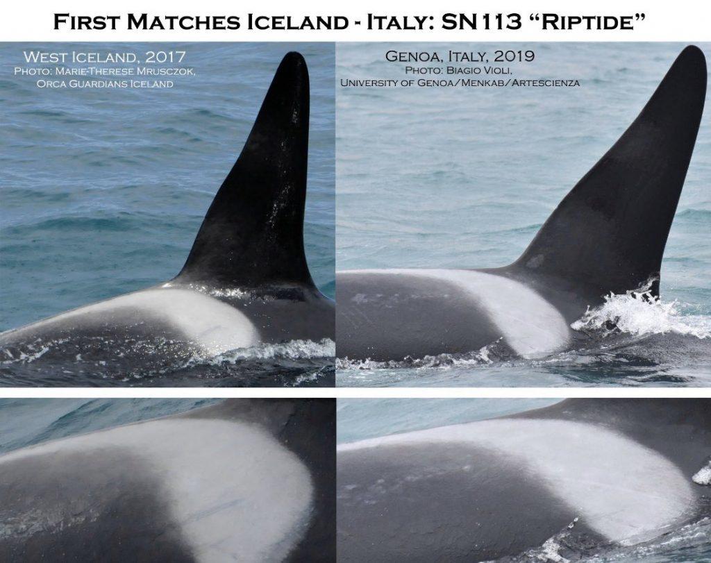 lungo viaggio delle orche di Genova