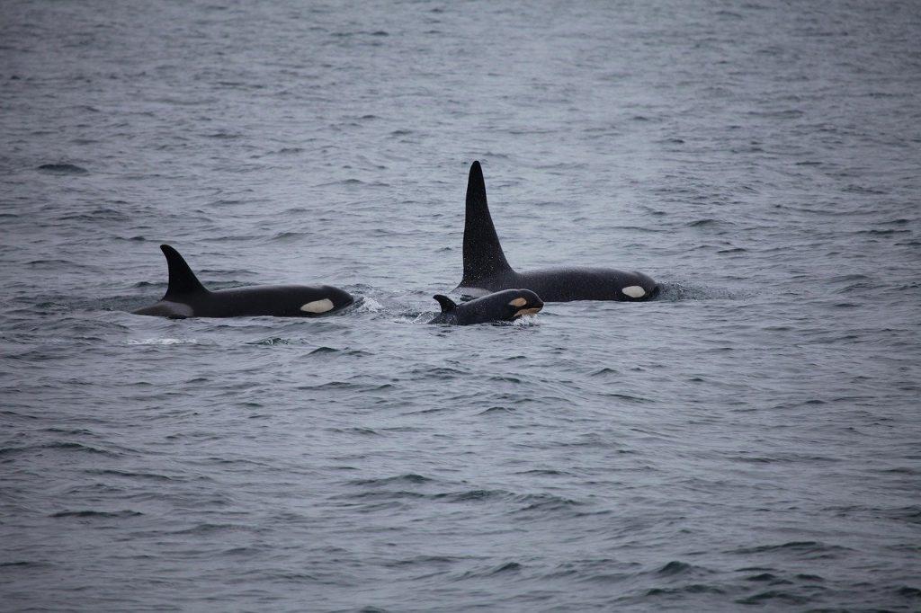 orche a Genova