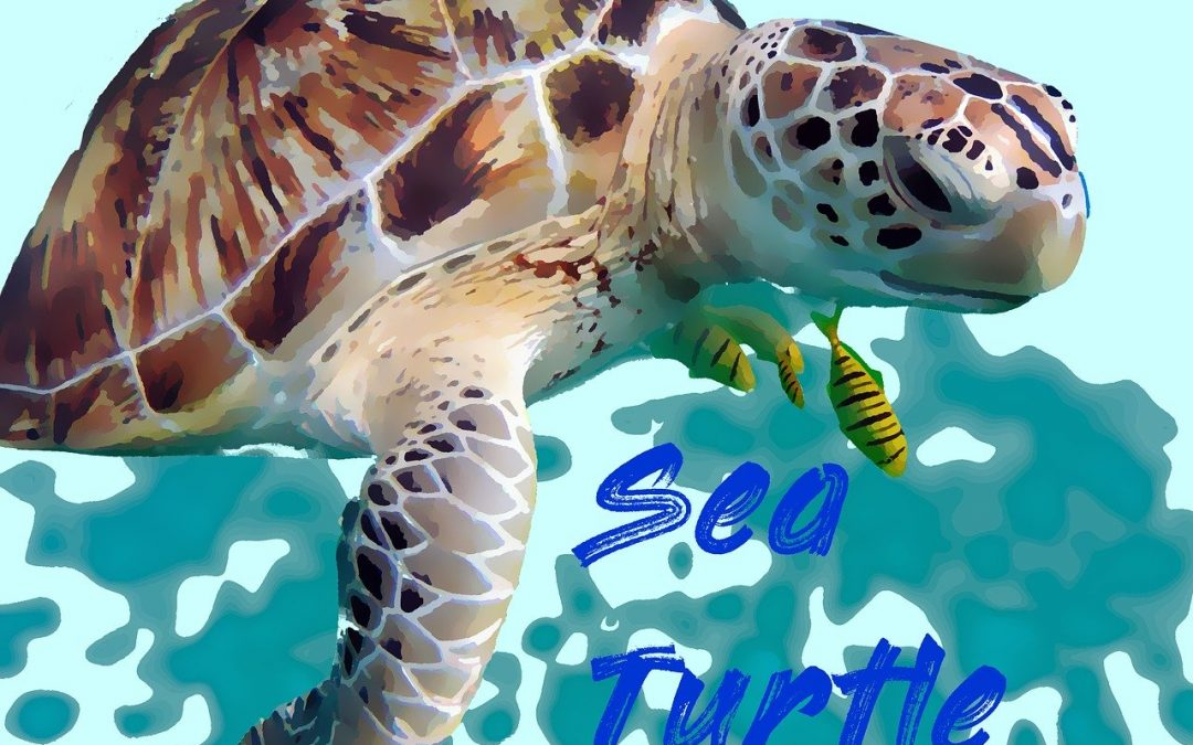 In Oriente il traffico illegale di tartarughe sta decimando la popolazione
