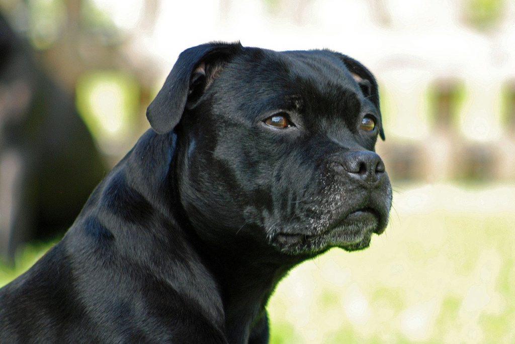 decrescita felice delle razze canine