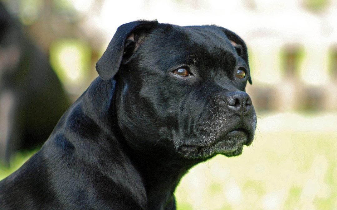 La decrescita felice delle razze canine è diventata indispensabile