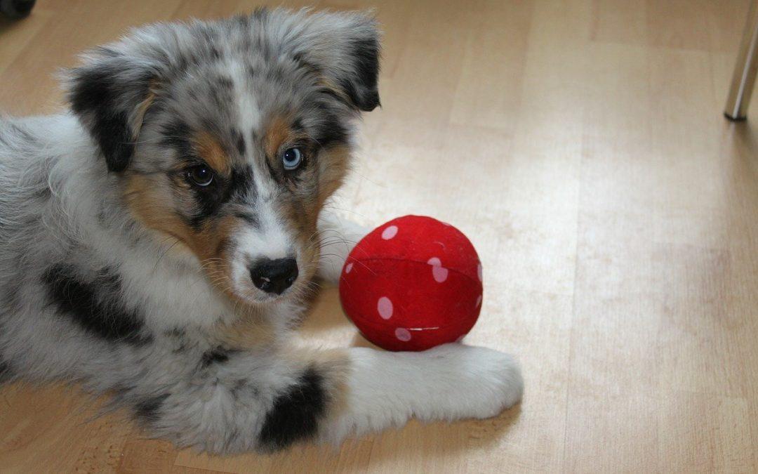 Maltrattamento prescritto, i cani in affido rischiano di tornare al denunciato