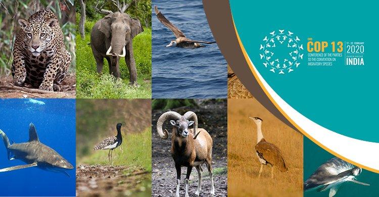 Si è aperta la COP 13, in India, sulla tutela della fauna migratoria