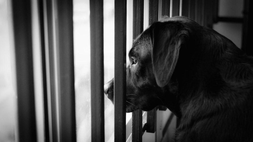 Confinare il cane sul balcone